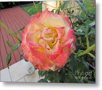 Tequila Sunrise Metal Print by Joyce Woodhouse