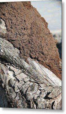 Termite Nest Metal Print by Steve Madore