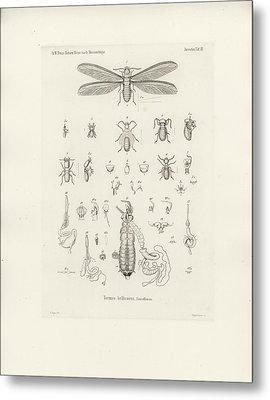 Termites, Macrotermes Bellicosus Metal Print by H Hagen