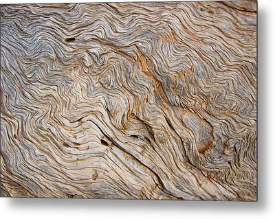 The Bark Of A Pine Is Sandblasted Metal Print by Taylor S. Kennedy