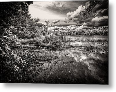 The Basin And Snails Metal Print by Bob Orsillo
