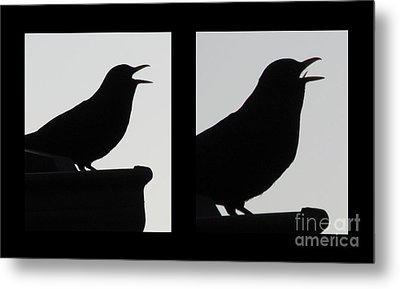 The Black Birds  Songs Metal Print by Joyce Woodhouse