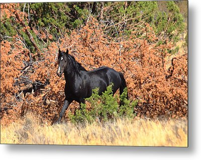 The Black Stallion Metal Print by Rod  Giffels