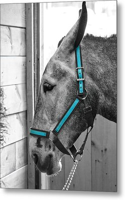 The Blue Mule Metal Print by Edward Myers