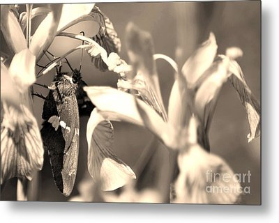The Butterfly Metal Print by Donna Greene