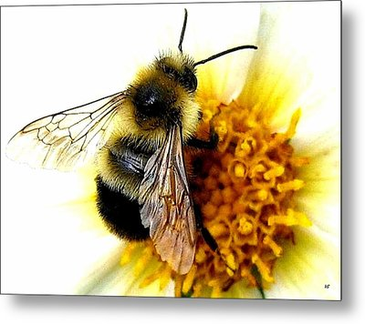 The Buzz Metal Print by Will Borden