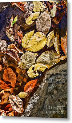 The Color Of Fall Metal Print by Paul Ward