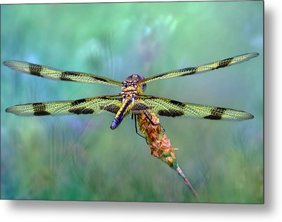 The Dragonfly Metal Print by Nina Bradica