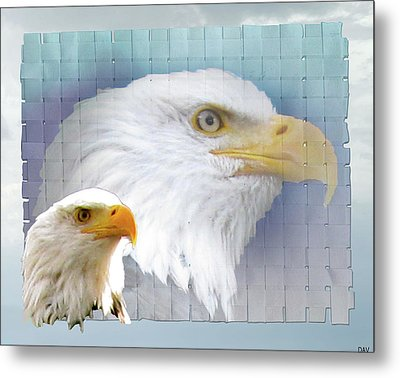 The Eagles Focus Metal Print by Debra     Vatalaro