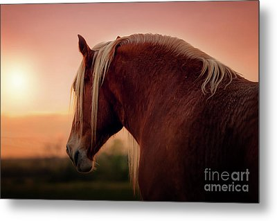 The End Of A Long Day At The Ranch Metal Print by Tamyra Ayles