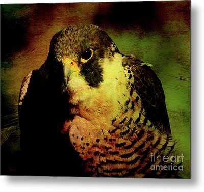 The Falcon Metal Print by Wingsdomain Art and Photography