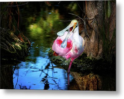 The Happy Spoonbill Metal Print by Mark Andrew Thomas