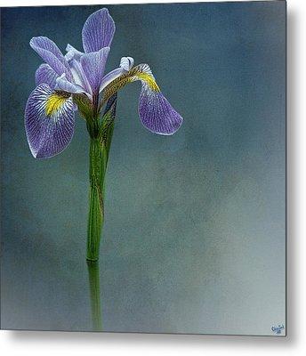 The Harlem Meer Iris Metal Print by Chris Lord
