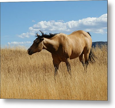 The Horse Metal Print by Ernie Echols