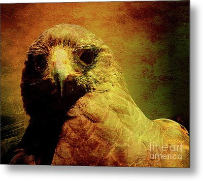 The Hunter . Portrait Of A Hawk . Texture . 40d7877 Metal Print by Wingsdomain Art and Photography