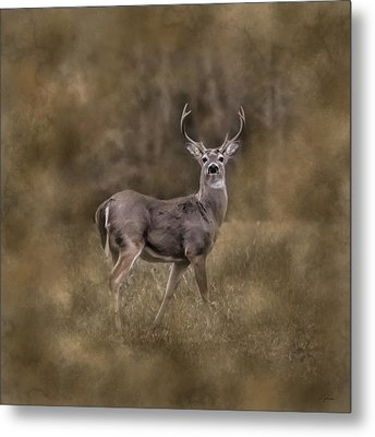 The Leader - Whitetail Buck Deer Art Metal Print by Jai Johnson