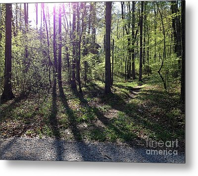 The Light In The East Metal Print by Janet Felts