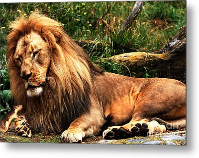 The Lion And The Mouse 2 Metal Print by Wingsdomain Art and Photography