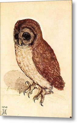 The Little Owl Metal Print by Pg Reproductions