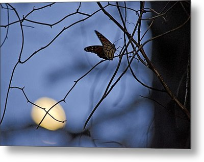 The Moon And The Monarch Metal Print by Jeff Rose