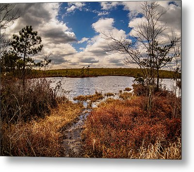 The Mysterious Pine Lands Metal Print by Louis Dallara