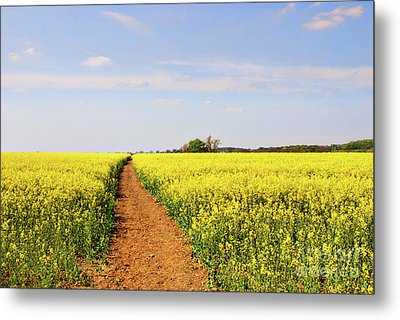 The Path To Bosworth Field Metal Print by John Edwards