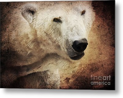 The Polar Bear Metal Print by Angela Doelling AD DESIGN Photo and PhotoArt