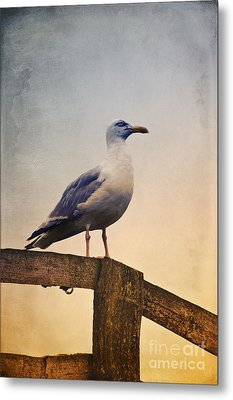 The Seagull Metal Print by Angela Doelling AD DESIGN Photo and PhotoArt