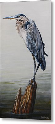 The Sentinel - Portrait Of A Great Blue Heron Metal Print by Rob Dreyer AFC