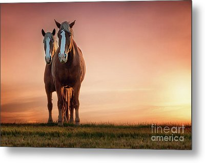 The Stallion And The Mare Metal Print by Tamyra Ayles