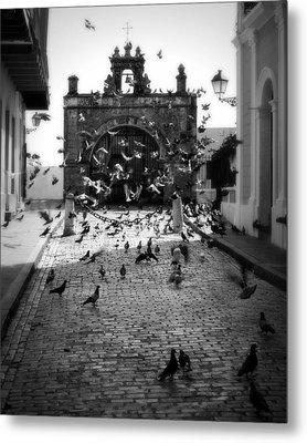 The Street Pigeons Metal Print by Perry Webster