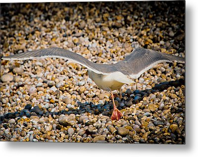 The Takeoff Metal Print by Loriental Photography