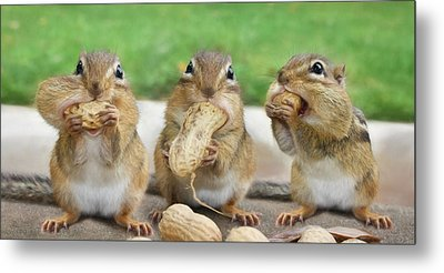 The Three Stooges Metal Print by Lori Deiter