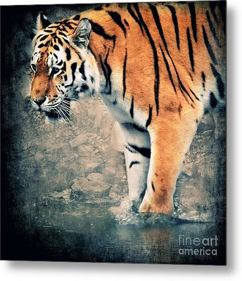The Tiger Metal Print by Angela Doelling AD DESIGN Photo and PhotoArt