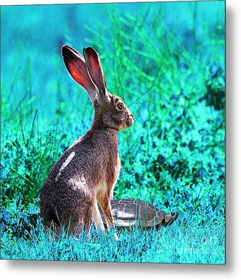 The Tortoise And The Hare . Cyan Square Metal Print by Wingsdomain Art and Photography