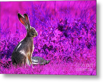 The Tortoise And The Hare . Magenta Metal Print by Wingsdomain Art and Photography