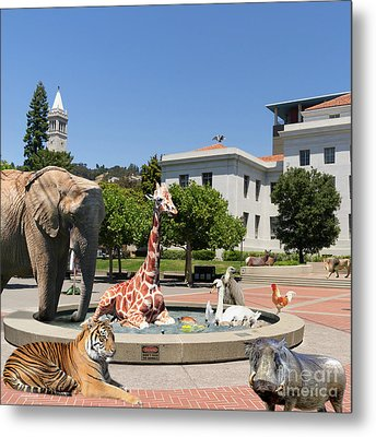 The University Of California Berkeley Welcomes You To The Zoo Please Do Not Feed The Animals Square Metal Print by Wingsdomain Art and Photography