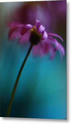 The View Above Metal Print by Kym Clarke