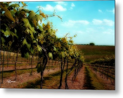 The Vineyard Metal Print by Jeff Swanson