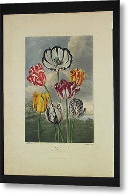 Thornton - Tulips Metal Print by Pat Kempton