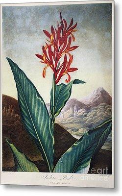 Thornton: Indian Reed Metal Print by Granger
