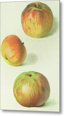 Three Apples Metal Print by English School
