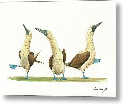 Three Blue Footed Boobies Metal Print by Juan Bosco