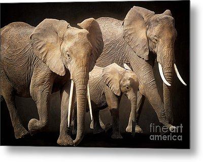 Three Elephants Metal Print by Angela Doelling AD DESIGN Photo and PhotoArt