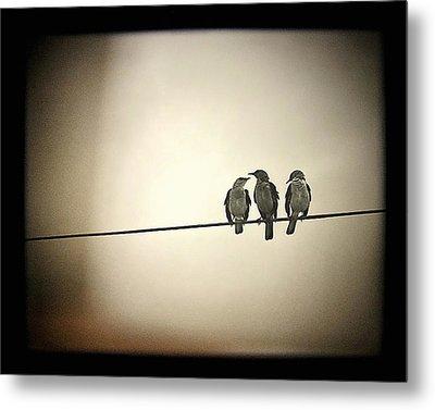Three Little Birds Metal Print by Trish Mistric