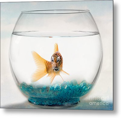 Tiger Fish Metal Print by Juli Scalzi