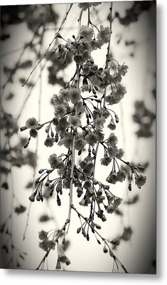 Tiny Buds And Blooms Metal Print by Angie Tirado
