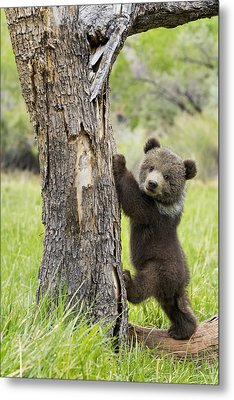 Too Cute For Words Metal Print by Melody Watson