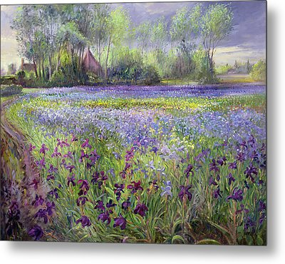 Trackway Past The Iris Field Metal Print by Timothy Easton