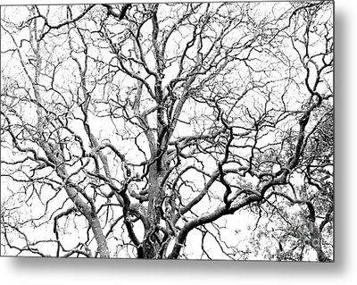 Tree Branches Metal Print by Gaspar Avila